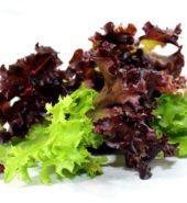 50 : 50 Mix Lettuce