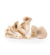 Mushroom Oyster Fresh