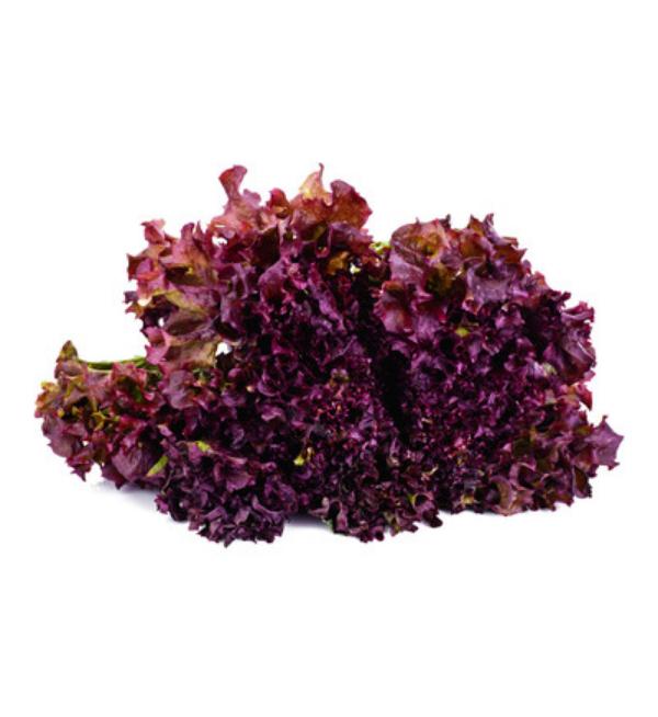 red-lettuce-2
