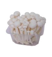 Mushroom Shimeji White