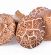 Mushroom Shiitake Fresh