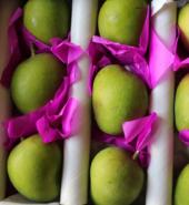 Mango Alphonso Unripe 3kg
