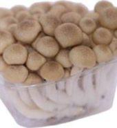 Mushroom Shimeji Brown
