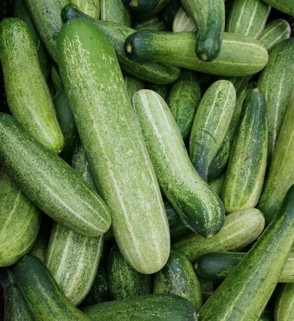 Cucumber Desi